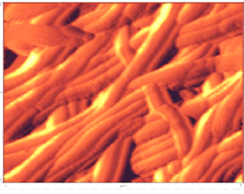 Nanotexture of linen material Atomic Force Microscopy gallery